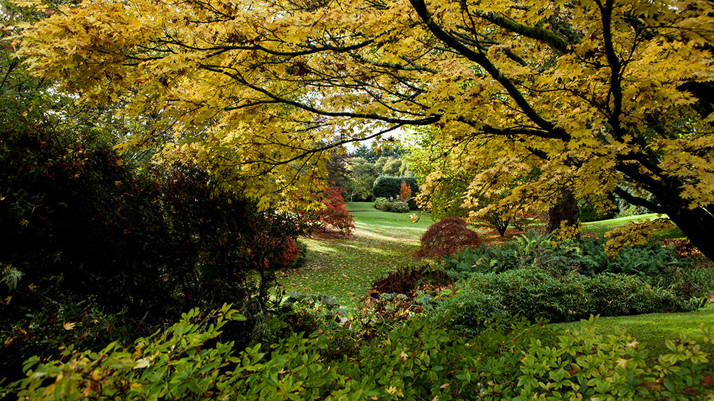 Autumn in the Gardens (c) Kim Aldis