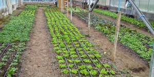 Greenhouse at School Farm Organics