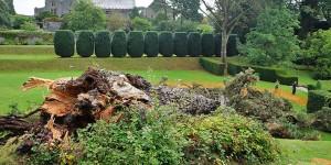 Monterey Pine falls in Dartington gardens