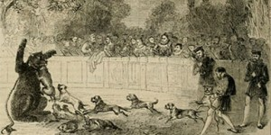 Bear baiting illustration