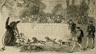 Bear baiting illustration