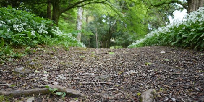 Footpath in Dartington gardens