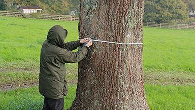 Volunteer Susan measures a veteran tree on the estate