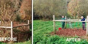 Before and after views of the Black Poplar conservation process
