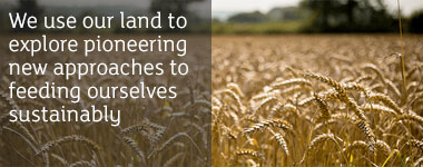 We use our land to explore pioneering new approaches to feeding ourselves sustainably