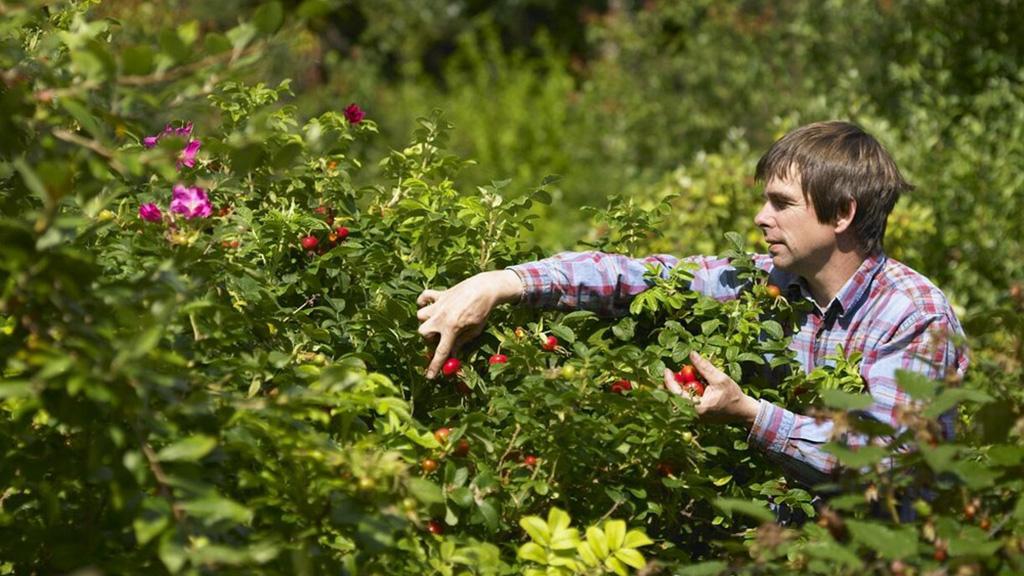 Food & Farming blog: Finding new ways to grow at Dartington