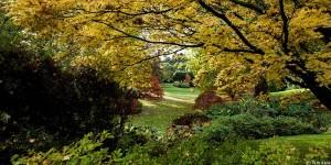 Gardens in autumn (c) Kim Aldis