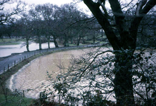 Edge of Queen's Marsh, Dartington in flood, 30 Feb 1967