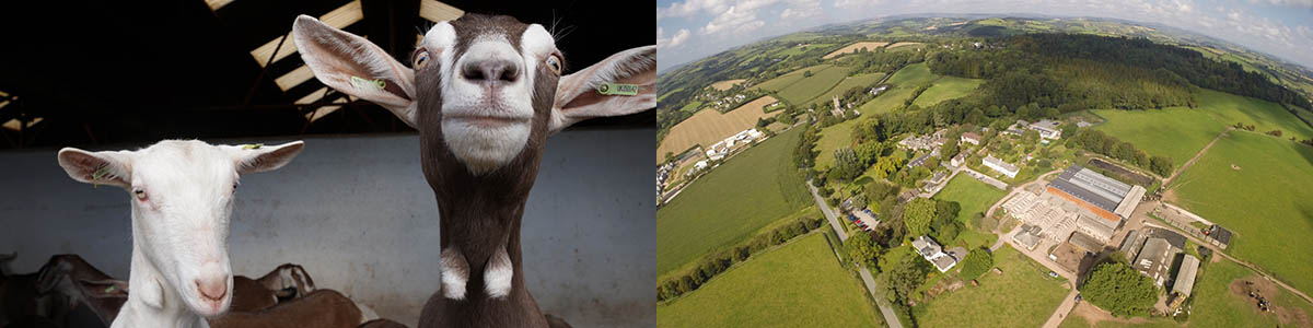 Goats (left) and Old Parsonage Farm (right)