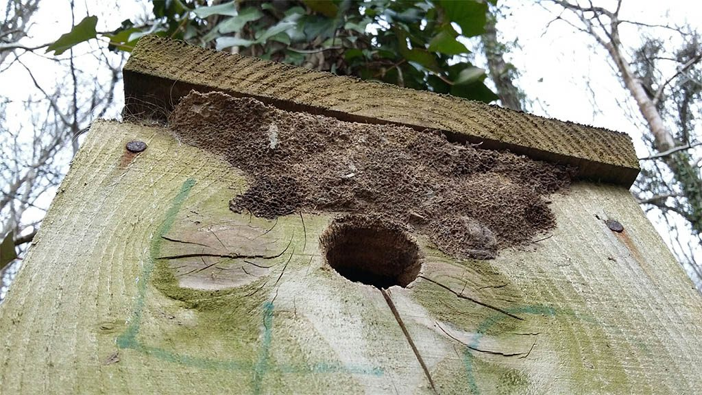 Nuthatch spit and mud seal outside nestbox. Photograph: Vicky Churchill, Woodlands and Conservation Volunteer
