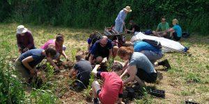 Grow Wild at Huxhams Cross on Open Farm Sunday 2016