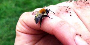 bee on finger