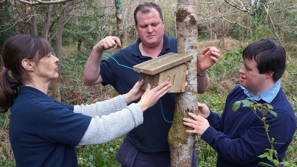 Dormouse nesting and conservation programme