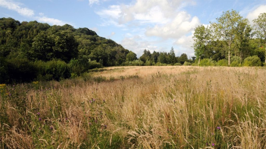 the-plantation-site