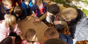 Primary school children from St Margaret's School in Torbay at an educational day at the Deer Park Wall conservation project
