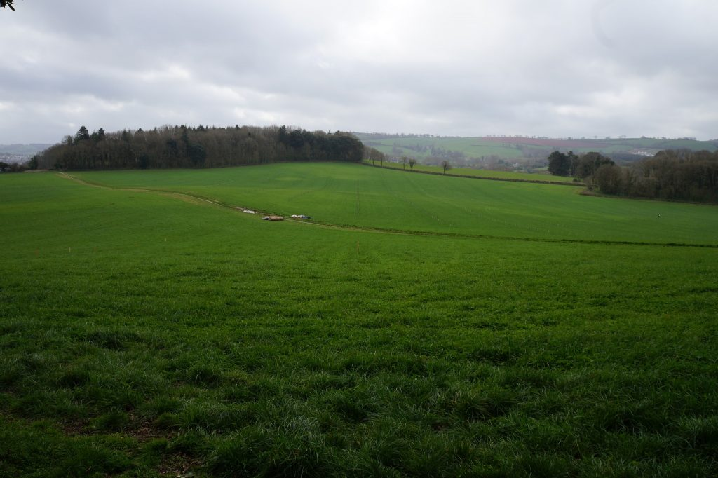 Broadlears agroforesty field: North corner, March 2017