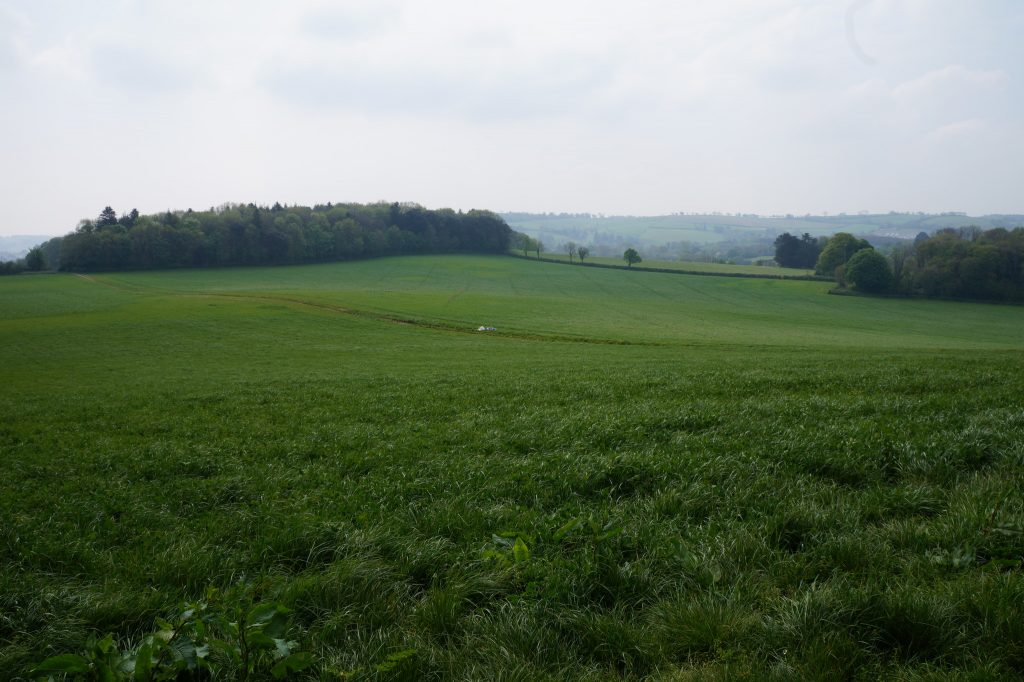 Broadlears agroforesty field: North corner, May 2017