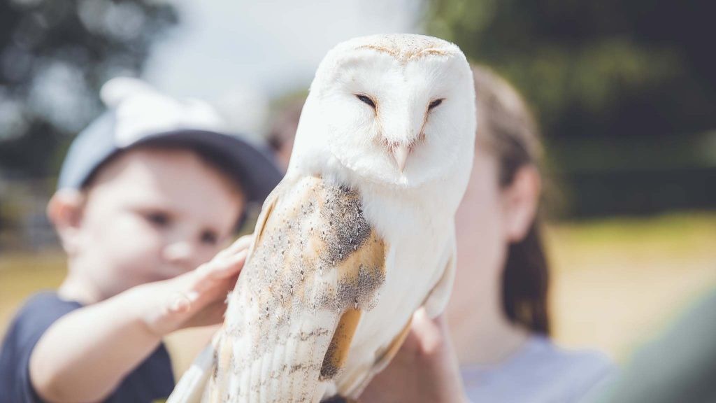 A visitor meets an owl from Totnes Rare Breeds