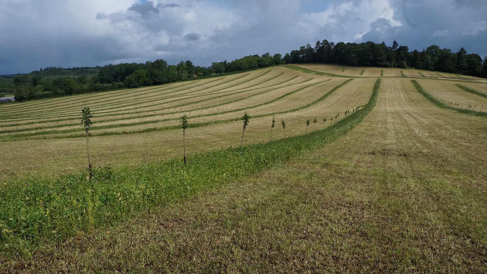 Agroforestry on farms essential to improve productivity and environmental protection