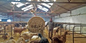 Jon Perkin and his goats at Dartington Dairy