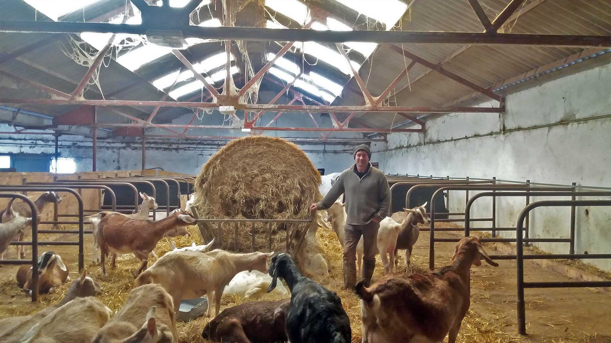 Jon Perkin and his goats at Dartington Dairy