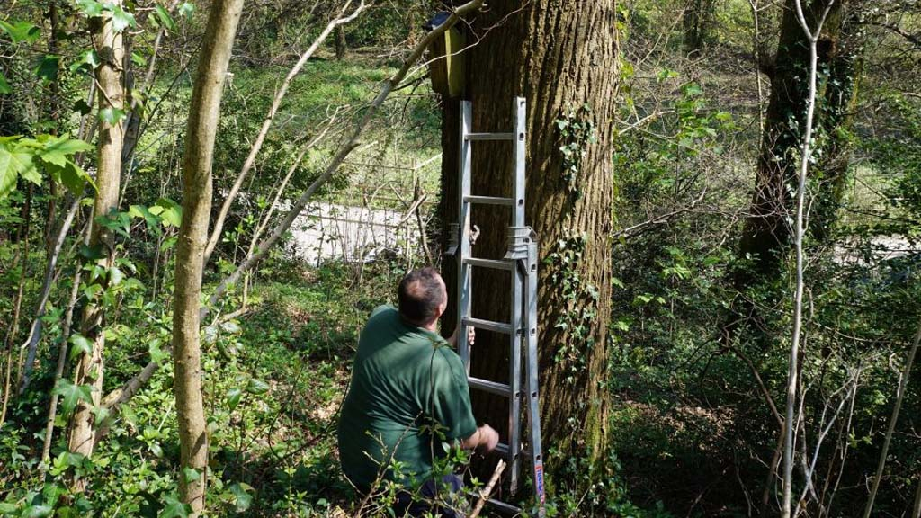 Volunteer Opportunity: Woodlands and Conservation