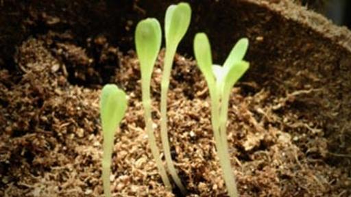 1. Soil