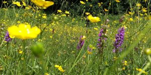 Dartington wildflowers