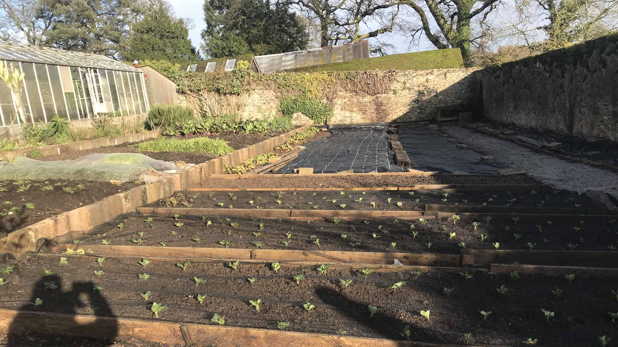 Raised beds planted Walled Garden