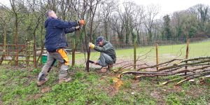 mike newby hedge laying