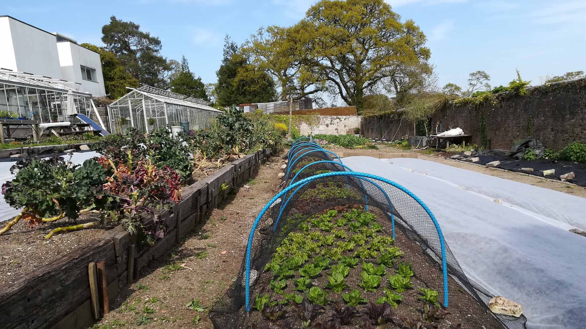 This is the lettuce bed in April , fleece now remove and replaced with netting to keep off the birdT