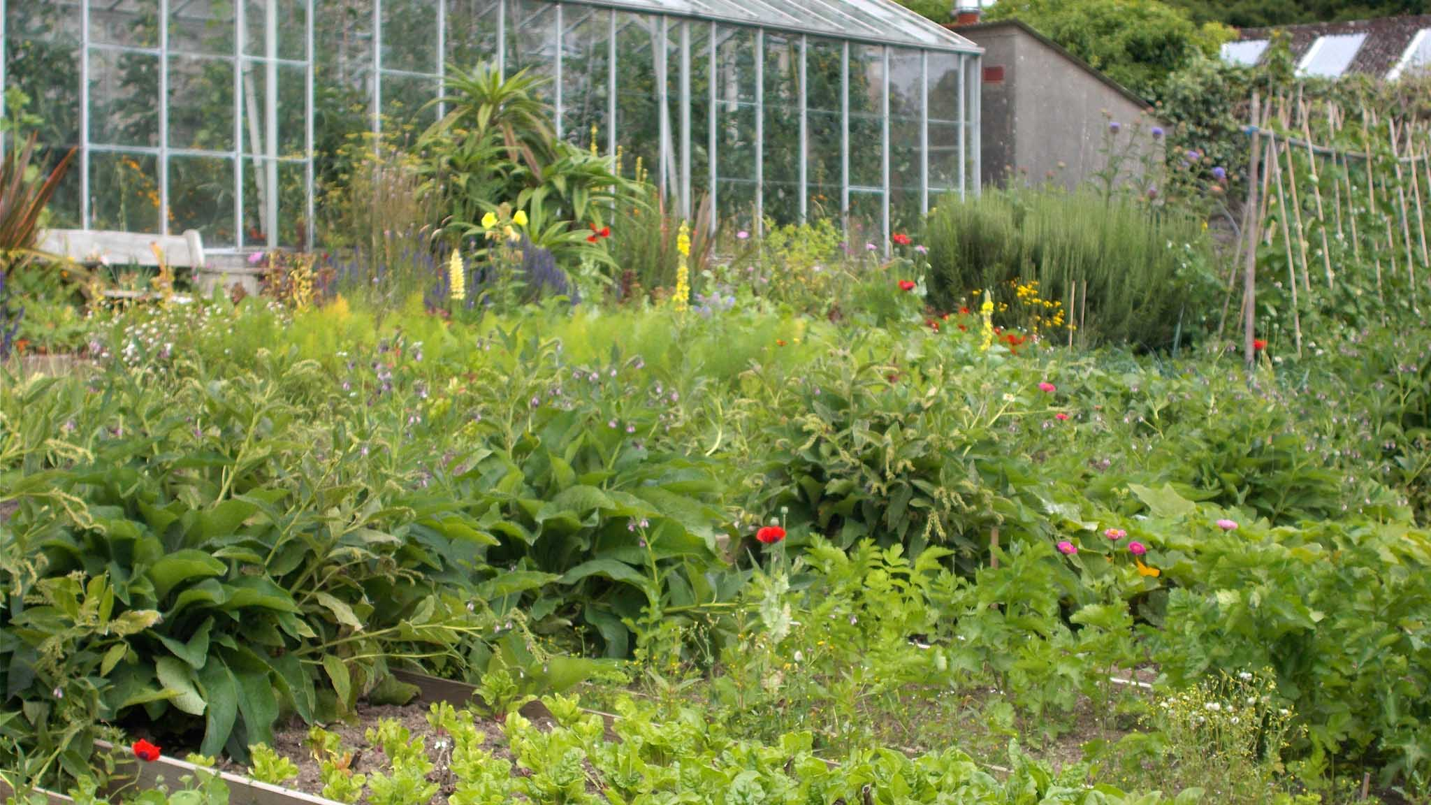 Walled Garden vegetables harvested in May