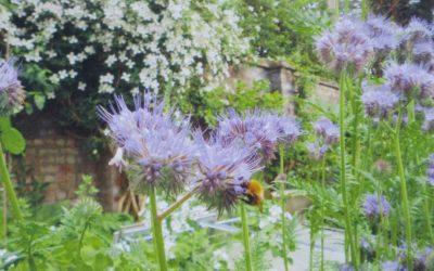 'On the edge' – a gardener's diary