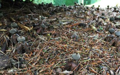 Dartington estate revealed as home for 19 'at risk' fungi