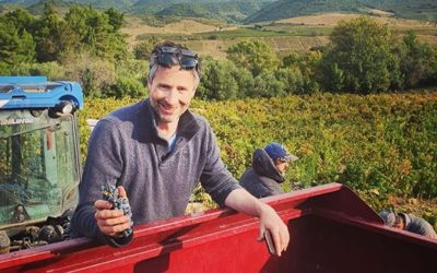 New wine programme announced