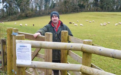 Plea for dog owners to take care around livestock
