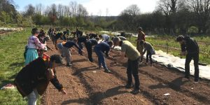 Engaged Ecology students sowing flax seeds in Henri's Field