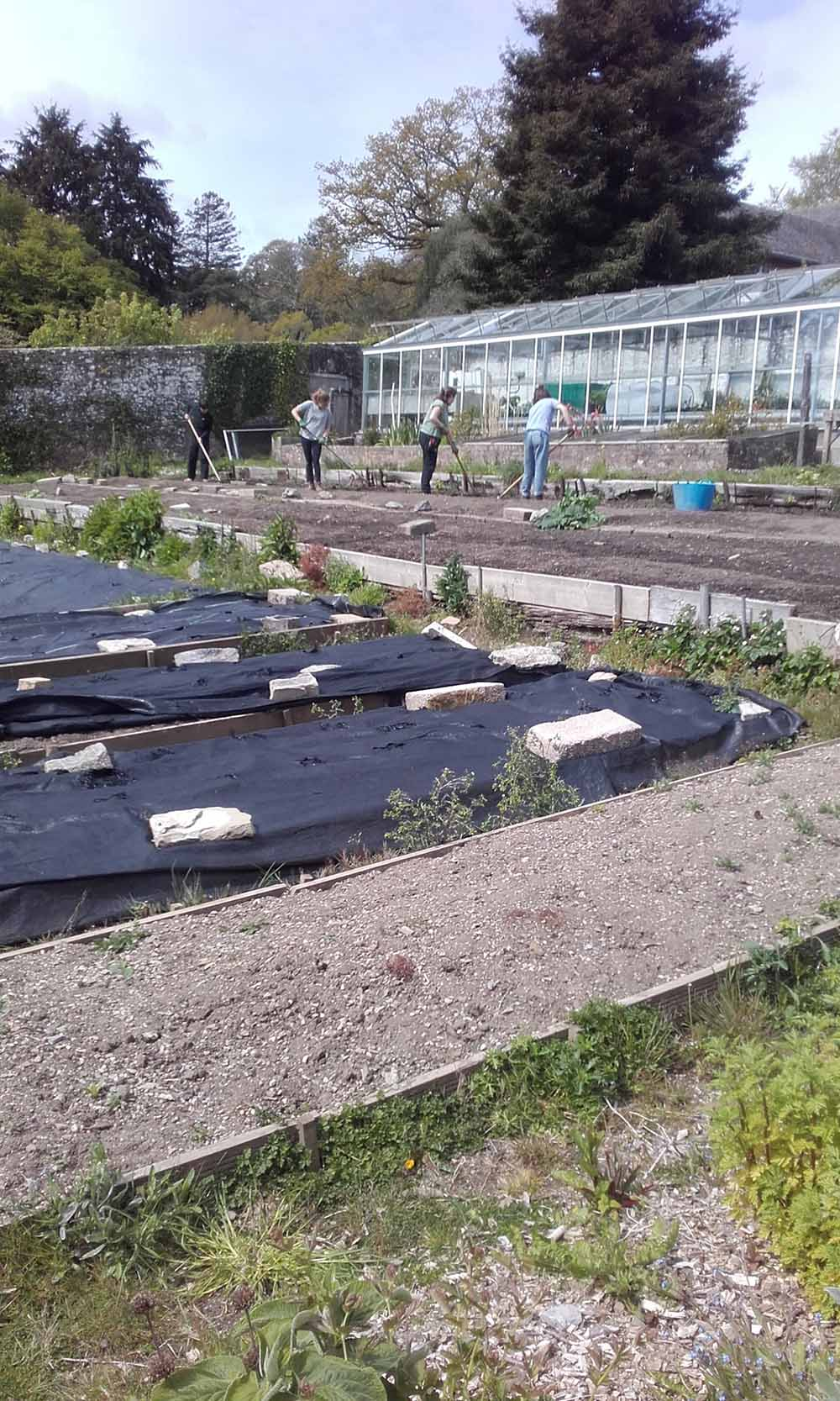 Wide shot of the beds outside