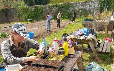 Diary: Notes from the Walled Kitchen Garden