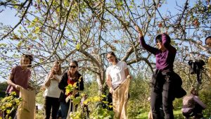 Students picking apples